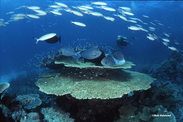 美しいサンゴ礁