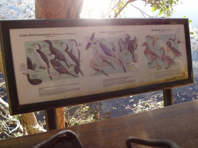 野鳥観察。どんな鳥がいるのかな