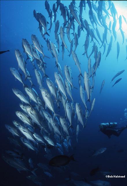 珊瑚や魚の群れがあちこちに