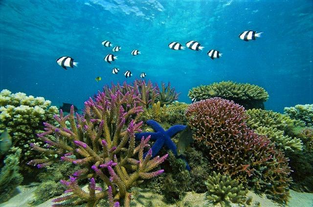 珊瑚も魚も元気な世界遺産の海