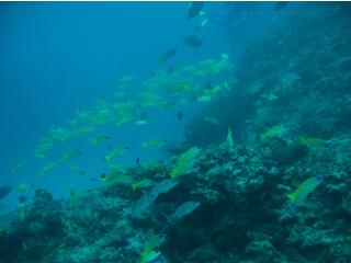 南の海ならではのカラフルな魚たち