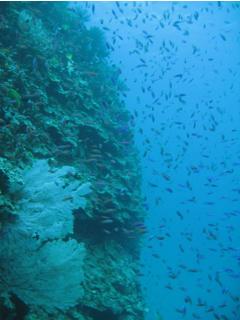 珊瑚も魚も元気です!