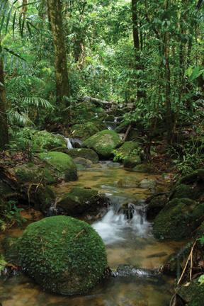 世界遺産 熱帯雨林に癒されます。