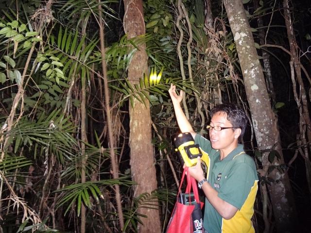 熱帯雨林散策で植物の説明をするガイド