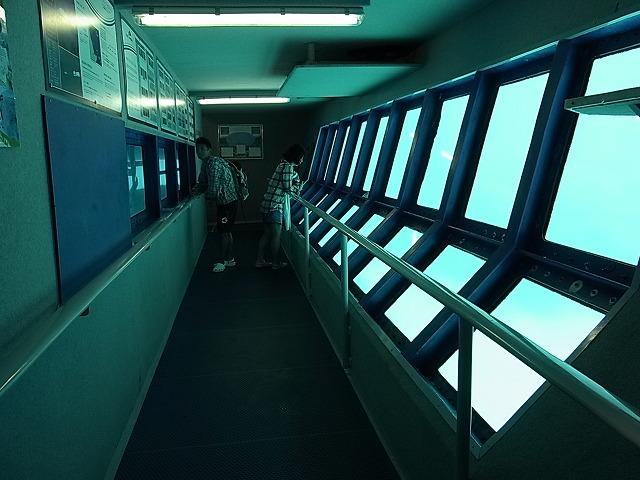 水中観察室では濡れずに海の中を楽しめます