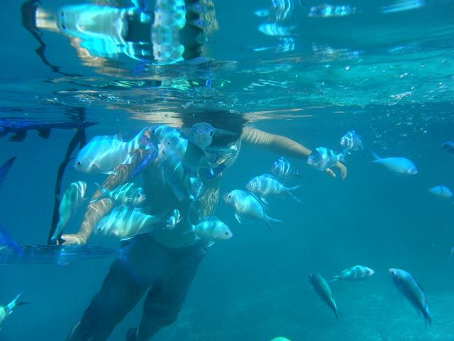 シュノーケリングで海中世界へ