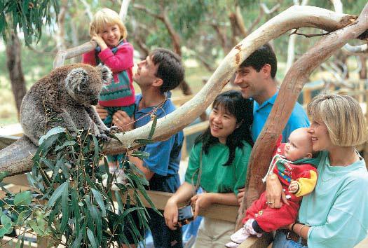 コアラ保護センターでコアラに接近!