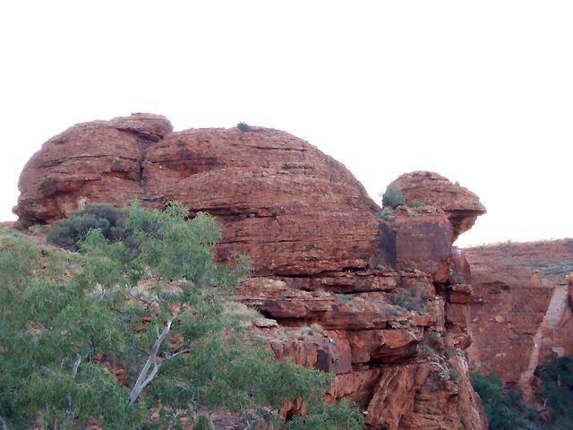キングスキャニオンで発見、エミュの岩!?