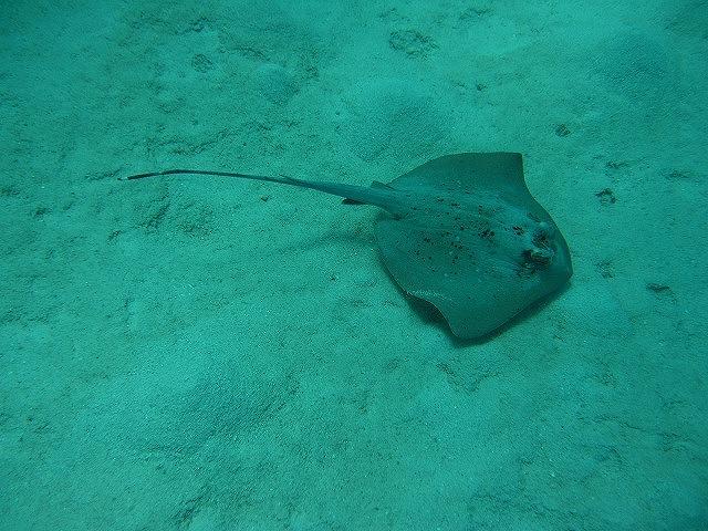 エイや海ガメなどの中型の生き物をたくさん見れます