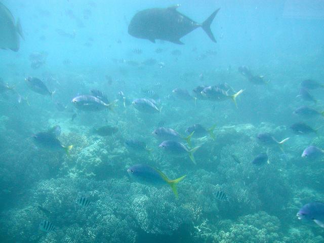 半潜水艇でグリーン島の水中世界を堪能!