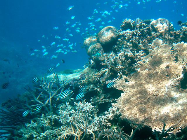 カラフルなサンゴ礁と魚たち