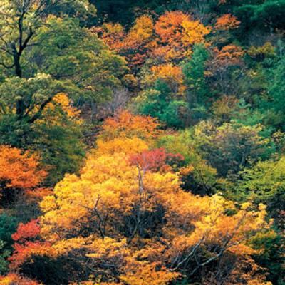 紅葉が美しい龍慶峡