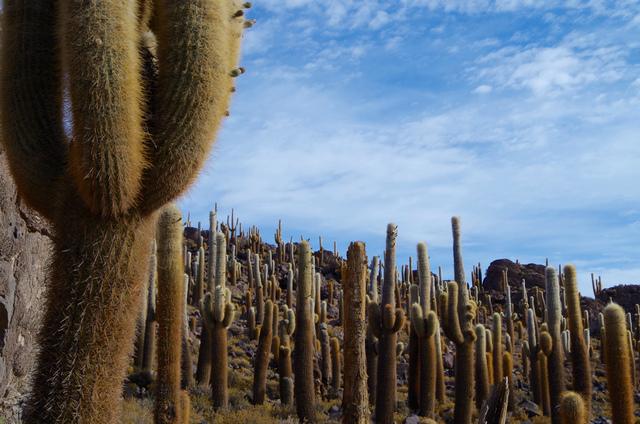 立ち入りは乾季限定。インカワシ島