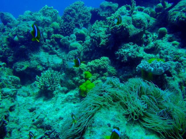これぞグレートバリアリーフという珊瑚や魚たち