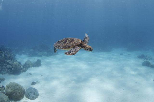 海ガメに会える確率も高いグレートバリアリーフの海