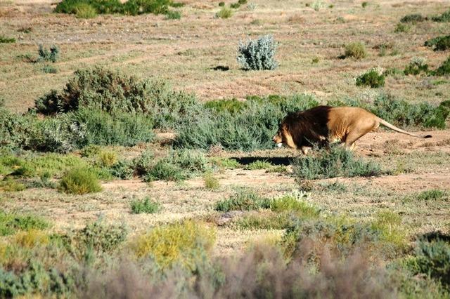 生き生きとした野生動物の姿が見られるアフリカ