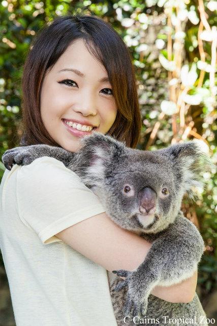 可愛いコアラと記念撮影、抱っこつきプランでのお申し込みを