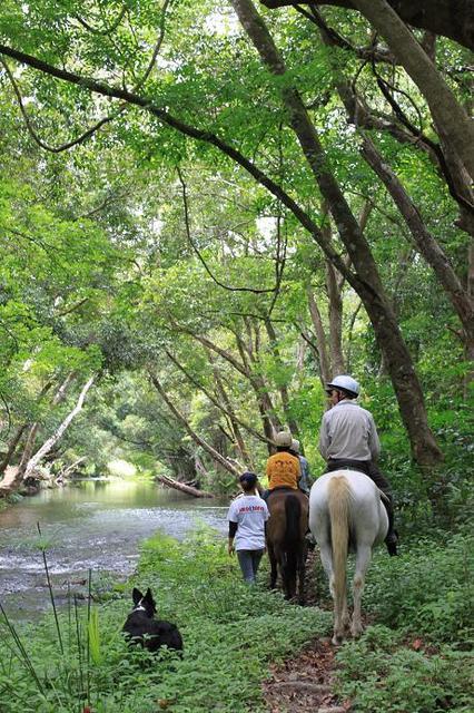 森の中の乗馬は本当に気持ちいい