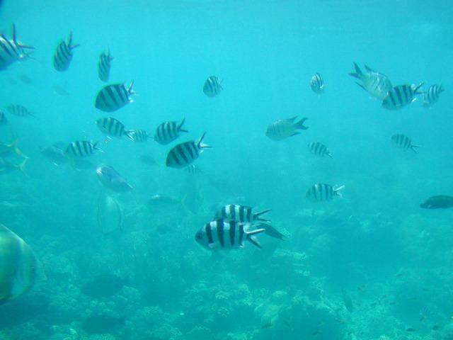 水中では沢山の熱帯魚が!