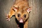 どきどき夜行性動物探検ツアー 野生の動物がたくさん見れるチャンス