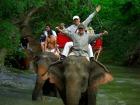 本格的象乗りトレッキング付き「世界自然遺産」カオヤイ