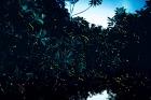 日本語ガイド付き 真夏のクリスマスツリー!あぴあぴ(ホタル) ツアー<午後発/夕食付>