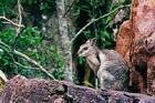 カカドゥとリッチフィールド国立公園 3日間