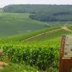 ランスと世界有数のワインの産地を訪れる!!シャンパーニュ地方1日観光 ホテル送迎付き