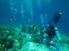 セブ島体験ダイビング+アイランドホッピング(パンダノンアイランド・BBQランチ付き)