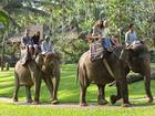 エレファントサファリパーク(象のショー/象乗り体験)