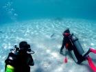 ビーチステイ体験ダイビング