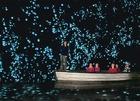 神秘的な光りを放つツチボタルで有名なワイトモ鍾乳洞を行くオークランド発日本語ガイド付き1日ツアー