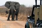 3泊4日クルーガー&私営動物保護区サファリ・ツアー