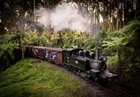 超格安! ダンデノン丘陵と蒸気機関車パッフィンビリー