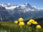フィルストとバッハアルプゼー・ハイキング1日ツアー 【期間限定6月~10月下中旬】