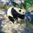 頤和園と北京動物園半日観光