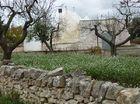 アルベロベッロ発 イトリアの谷めぐり観光 プライベートチャーターツアー