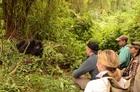 野生のゴリラが見られる!3泊4日ウガンダサファリツアー【エンテベ空港発着/往復フライト利用】
