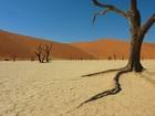 世界遺産ナミブ砂漠を訪れる!ソサスブレイ2泊3日キャンプツアー【英語ガイド/ウィントフーク発着】