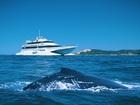 期間限定!イルカとクジラに会えるタンガルーマドルフィン・ホエールウォッチングクルーズ【ゴールドコースト発着/ランチ付/イルカの餌付け付または無し/6月~10月までの催行】