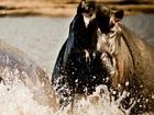キリマンジャロ発着 セレンゲティ国立公園がすぐそこ、ヴィクトリア湖のほとりに泊まる2泊3日【宿泊2泊 / ゲームサファリ / 全食事付き】