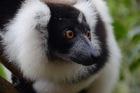 南マダガスカル 沢山のキツネザルが集まる地域 ベレンティー私設保護区を訪れる4泊5日 【アンタナナリボ空港送迎 / アンタナナリボ市内2泊+ベレンティー2泊 / 日本語ガイド / 全食事】