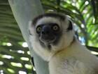 南マダガスカル 沢山のキツネザルが集まる地域 ベレンティー私設保護区を訪れる4泊5日 【アンタナナリボ空港送迎 / アンタナナリボ市内2泊+ベレンティー2泊 / 英語ガイド / 全食事】