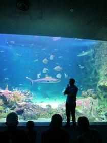 シーライフ・シドニー水族館