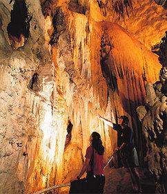 ワイトモ洞窟付きロトルア行き 半日ツアー