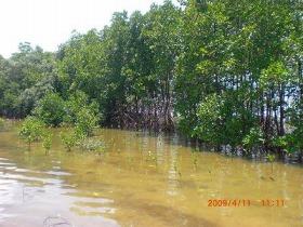 ニャチャン川をクルーズし自然に触れる