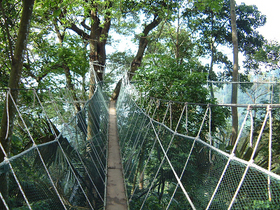 クアラルンプール近郊・森林研究所(FRIM) でトレッキング!!ジャングルトレッキングとバクテー料理