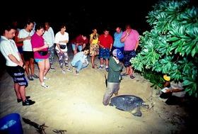 ウミガメの産卵観測とオランウータン保護区の旅 1泊2日(サンダカン空港発着)