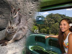 午前中にキュランダ!午後に動物探検!どきどき動物探検 + キュランダ列車またはスカイレール(エコツーリズムオーストラリア認定ツアー!)