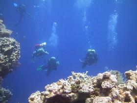 グアムの海でステップアップしよう!PADIアドバンスダイバーコース(5ダイブ・ナイトダイブなし)